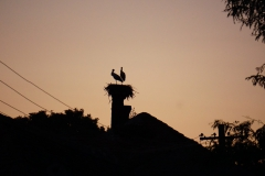 Storks on the school building