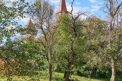 Wie alt mag dieser Charakterbaum wohl sein? 2,40 m ist sein Stammdurchmesser!