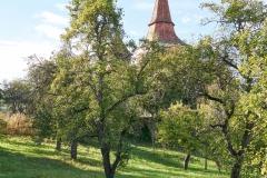 einer der Birnbäume